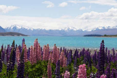 Location_Tekapo_LakeTekapo